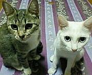 猫々海賊団