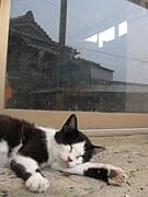 札幌猫好き同好会