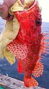 根魚が好き!