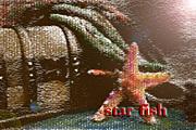 starfish 雑貨