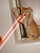 ☆TEAM 猫ビーム☆