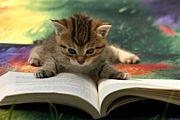 本、めっちゃ読み返します。
