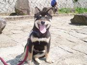 奈良 柴犬の会