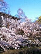 京教から関東へ飛び立つ!