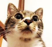 うちの猫はとても可愛いin群馬★