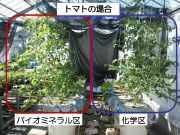 有機肥料で養液栽培