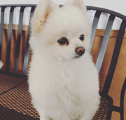 うちの犬はとても可愛いin群馬★