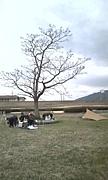 三川公園スポーツカイト体験会