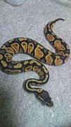 長崎ヘビ好き集合