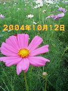 2004年10月12日生まれ