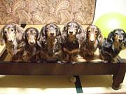 犬・4匹(以上)のオーナー