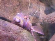 飼育のための魚図鑑