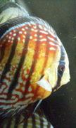 熱帯魚ファン