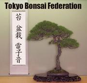 苔・盆栽・エレクトロニカ