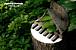 "dandelion ""piano story"" yoko"