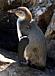 葛西臨海水族館ペンギン捜索隊