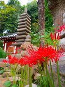 奈良の花だより