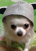 犬大好きin香川県