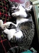 猫はやっぱり可愛い!