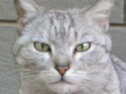 世界ネコ好き最強軍団