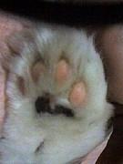 猫の引っ掻き傷は勲章☆