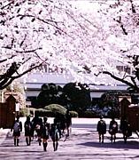 川越女子高校 昭和55年卒業生
