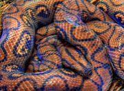 どうしてもヘビ柄♥