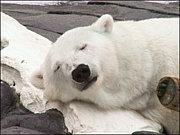 No Sleeping! No Life!