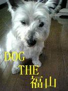 DOG THE 福山