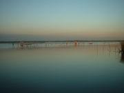 印旛沼の釣り