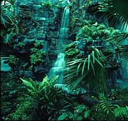 行くぜ!熱帯雨林