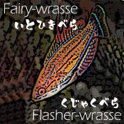 Fairy&Flasher union