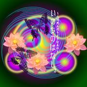 浅川 嘉富