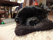 甚八ファンクラブ(犬)