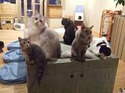 猫ボランティア