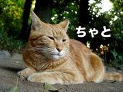 都会の森の茶トラ猫ちゃとの毎日