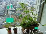 オフィース緑化計画