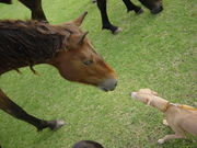 種子島犬好きの会
