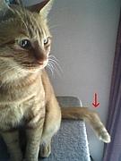 鍵しっぽ猫が好き