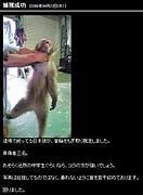 虐待団体。(日本猿コラ)