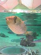 逃した魚は大きかった!!!!!!!