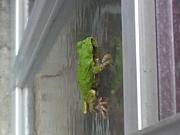 井の中の蛙たち