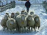 迷える子羊たちの部屋