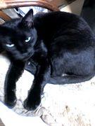 白血病の猫 ミー子