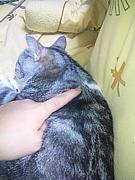 ネコの肩甲骨はセクシーだ!
