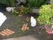 庭の猫は元気会