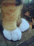 猫の足に萌える。
