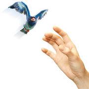 さよなら、青い鳥