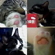 【ニコ生】『三匹の猫〜ewew』
