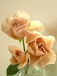 薔薇はジュリア